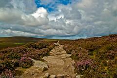 Path trough the heather's hill. (kurzew) Tags: ireland dublin mountains nature trekking path walk heather hill grzegorz kurzweg kurzew