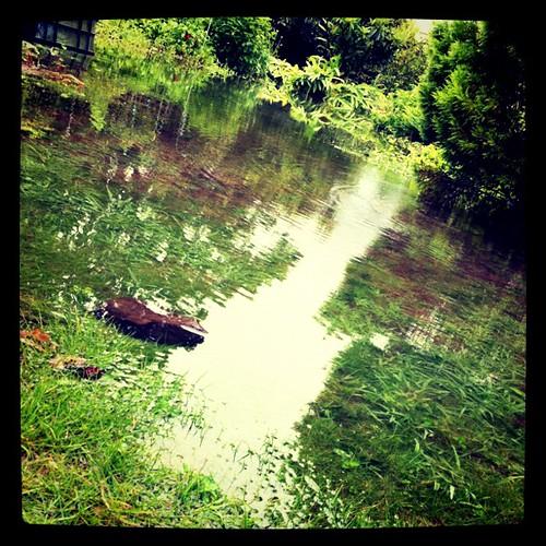 大雨で庭冠水。さすがもと水田、水はけが悪いw