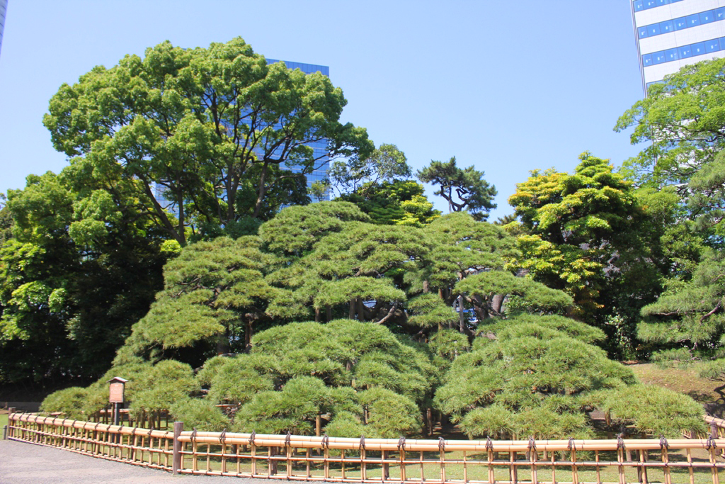 A walking guide of Hamamatsucho  (12)