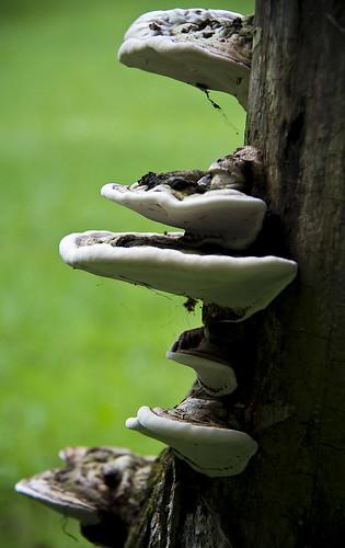 fungus  by McBeth