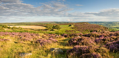 On the Edge (Sue M2009) Tags: heather derbyshire moor peakdistrictnationalpark curbaredge baslowedge