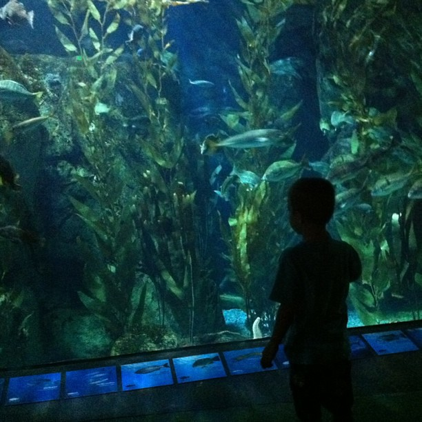 Project 365 234/365: Angry Kid checking out the tank @AquariumPacific #aopmb