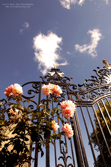 flowers at the gate