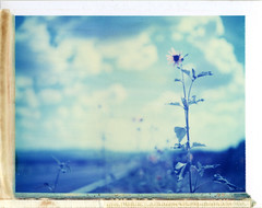 Wilhoit, AZ (moominsean) Tags: flowers arizona sunlight polaroid desert monsoon 190 wilhoit type108 expired012000