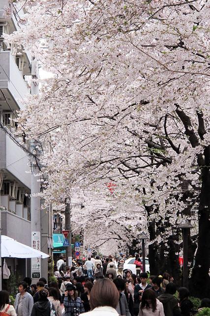 110409_164425_目黒川_桜