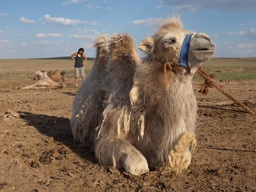 Desierto del Gobi 24