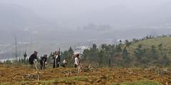 Black Hmong Women Tilling Soil, Tả Phìn Valley, Sa Pa (чãvìnkωhỉtз) Tags: lumix women raw farmers vietnam soil agriculture sapa hmong laocai tilling blackhmong ethnicminority 2011 việtnam taphin lx5 làocai dântộc hmông tảphìn hmôngđen gavinkwhite
