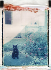 Le chat noir (emilie79*) Tags: blackcat polaroid180 iduvfilm
