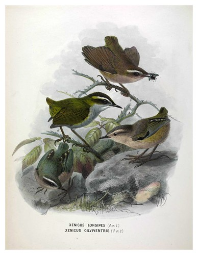 007-A History of the Birds of New Zealand 1873-Sir Walter Lawry Buller