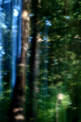 Forest (blinked) Tags: forest kinetic mybackyard icm youcandriveoutnaturewithapitchforkbutitalwayscomesroaringbackagain