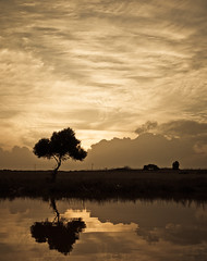 (ssj_george) Tags: sunset orange lake reflection tree nature water monochrome field clouds river lens lumix raw sundown natural cloudy salt cyprus file panasonic saltlake pancake 20mm lanscape dmc larnaca lightroom larnaka kypros f17 gf1  georgestavrinos   ssjgeorge  giorgosstavrinos