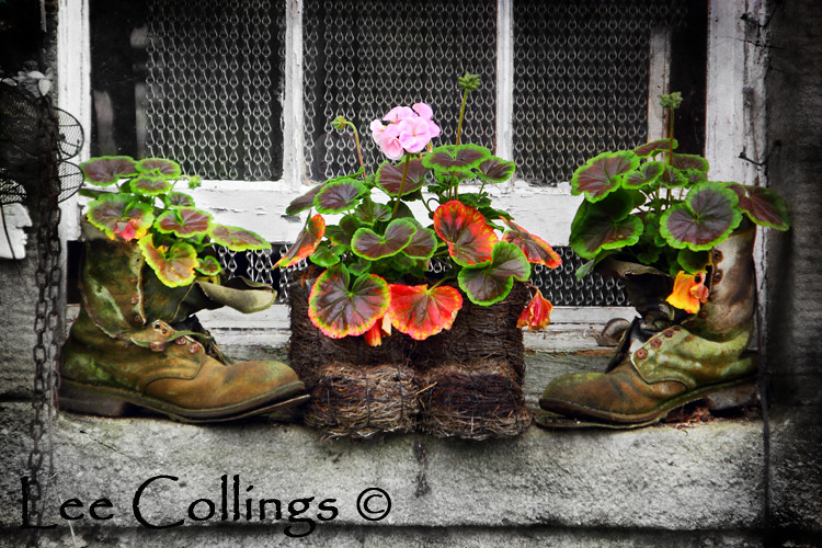 Planters Yorkshire on