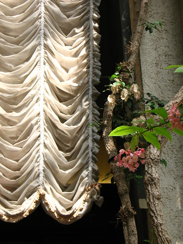 curtain and plants