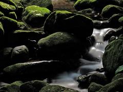 Passing Water | gua passando (Andre Carregal) Tags: verde green water gua de rocks stream long exposure small over covered passing pedras sobre pequeno exposio longa riacho passando coberta sooc