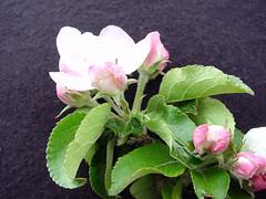 V.1 Flower Cluster