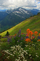Rolling Mountain Meadow (justb) Tags: flowers mountain mountains green creek canon river hope bc bend hiking indian north meadows peak traverse canyon alpine wildflowers fraser paintbrush lupine scuzzy spuzzum subalpine justb 40d