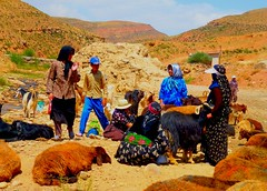 Hand-milking sheep and goats by village women in NW Iran (peggyhr) Tags: peggyhr villagewomen milking goats sheep river zagrosmountains textures colourful sky clouds summer highelevation vegetation waterfall bridge rocks sunny hot brown black green red blue white ochre beige boy hats scarves chador skirts pants shirts cummerband kurds turks valley p1100627ap aghdarreh nwiran mygearandme heartawards flickraward flickrbronzeaward lomejordemisamigos blinkagainforinterestingimages visionaryartsgallery vivalavidalevel1 musictomyeyes nossasvidasnossomundoourlifeourworld avpa1maingroup artofimages thebestshot soe sapphireawards showroom 100commentgroup 25faves