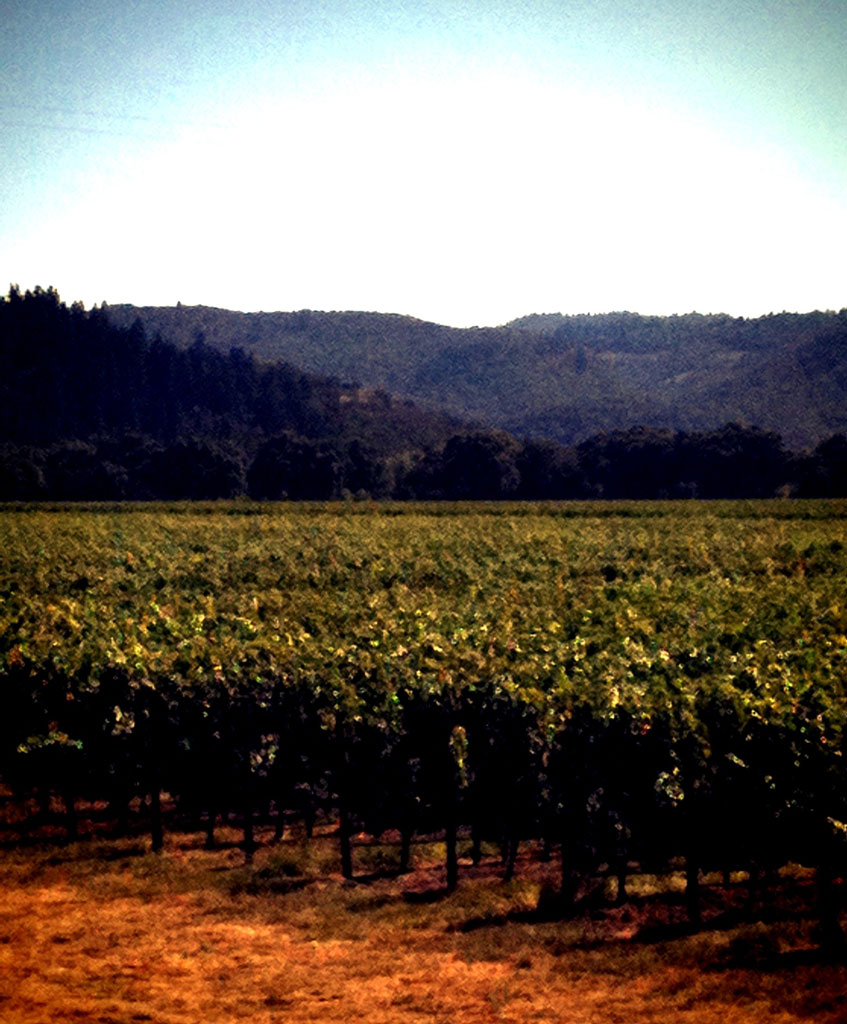 Saturday's Vineyard view Silver Oak Cellars