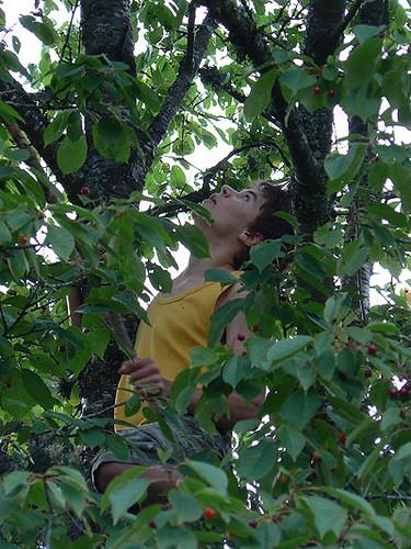 dans l'arbre.jpg