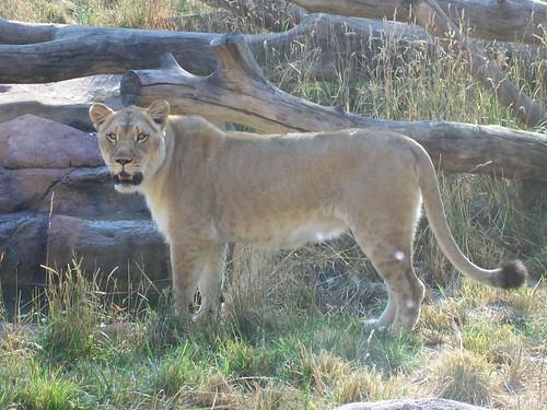 Zoo - 7-17-11 013