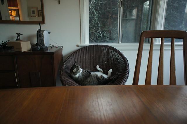 Micio_reclining