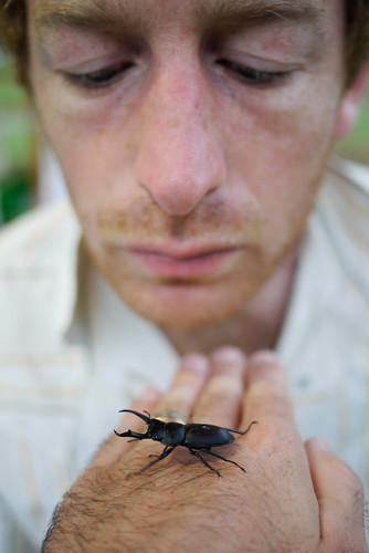 A cool beetle at Makkari Camping Ground, Hokkaido, Japan