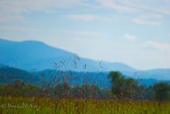 Meadow Grasses @ Cades Cove, TN (-bdm-) Tags: sky mountains field grass rural landscape country meadow hay blueridgemountains greatsmokymountains cadescove greatsmokies d80 nikonflickraward