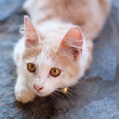 Fury !!! (Rob McFrey) Tags: sardegna italy male animal animals cat puppy 50mm nikon kitten feline italia sardinia kitty rob af roberto nikkor f18 18 50 fury cucciolo fifty nifty barbagia d90 afd belvì mcfrey defraia
