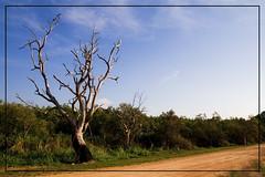 pure australia (Tom Bresenhuber) Tags: tree australia queensland australien cooktown