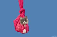 (Heilah Alnasser) Tags: pink blue cat nikon nikkor 70200mm d300 heilah heilahalnasser