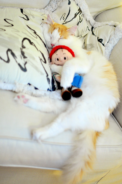 cute cat cuddling with linus