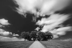 Memory lane (Fredrik Nordqvist) Tags: longexposure trees sky bw clouds nikon mb soe blackdiamond d300 blackwhitephotos flickraward 100commentgroup nikonflickrawardgold mygearandmesilver
