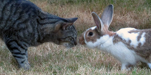 Silver and His Rabbit Friend