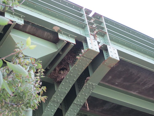 Parrots living in a bridge @ 140s