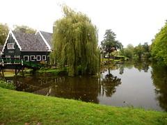 Green is in the air (RobbiSaet) Tags: city bridge trees verde green amsterdam alberi nikon village nederland coolpix olanda zaanseschans città s3000 villaggio paesibassi robbisaet robertasaettone