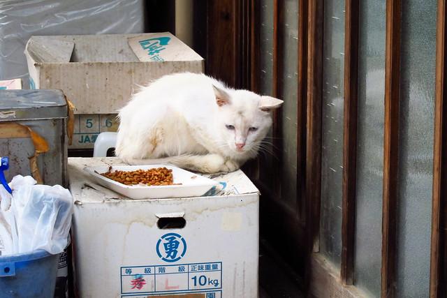 Today's Cat@2011-09-01