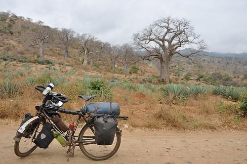 Bike and baobabs