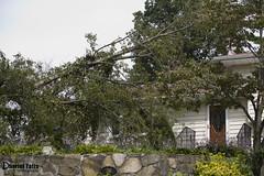 Tree house (Dharielt) Tags: house tree ray helmet chainsaw ax removal ban stihl