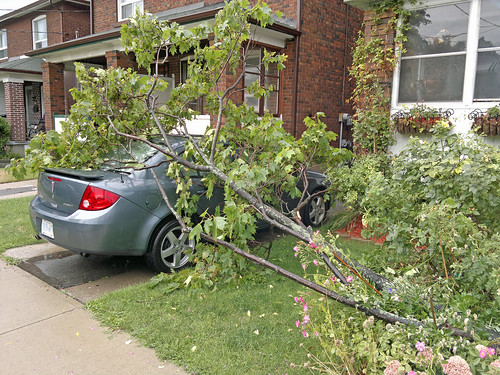 Large tree branches cover our car 12