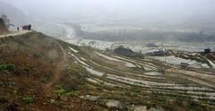 59_LAO78550084 (TC Yuen) Tags: vietnam sapa hmong terracefarming locai