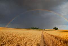 Pot of Golden Wheat (Harry2010) Tags: road cloud nature rainbow explore saskatchewan grassland prairies frontpage omot