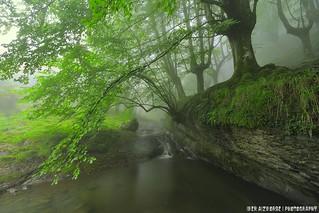 Arrama zubiak / Puentes rama
