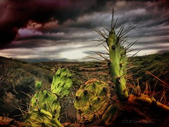 The end of the world (Carmen Cabrera (tSfruit)) Tags: cactus mountains clouds photography cloudy sting stormy app 3gs apps iphone mobileshot stings mobileart mobilephotography iphonephoto iphonography iphoneart iphoneshot iphoneography iphoneographer iphoneartwork iphonographer editedoniphone iphone3gs carmencabrera carmencabreraiphoneography carmencabreraphotography