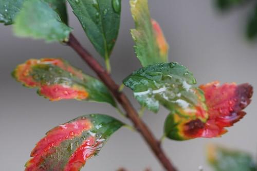 雨上がり /  After a rain