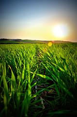 shine, please. (claudehacker) Tags: blue sunset sky plants sun verde green grass landscape nikon ground shining plantao 18105mm d5100