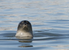 DSC_2760_2 (spitsbergenoutdoor) Tags: birds animals norway wildlife svalbard arctic polarbear seal polar spitsbergen fugler longyearbyen arcticfox isbjrn mke hvalross polarrev whalrus arktiskrev spitsbergenoutdooractivities