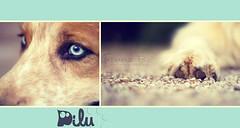 Pilu (Franz B. Photography ) Tags: portrait dog art animal canon photography sweet