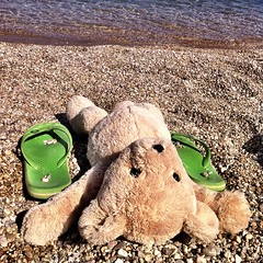 #bear said he loves the sea and will come every day to say hello to the waves