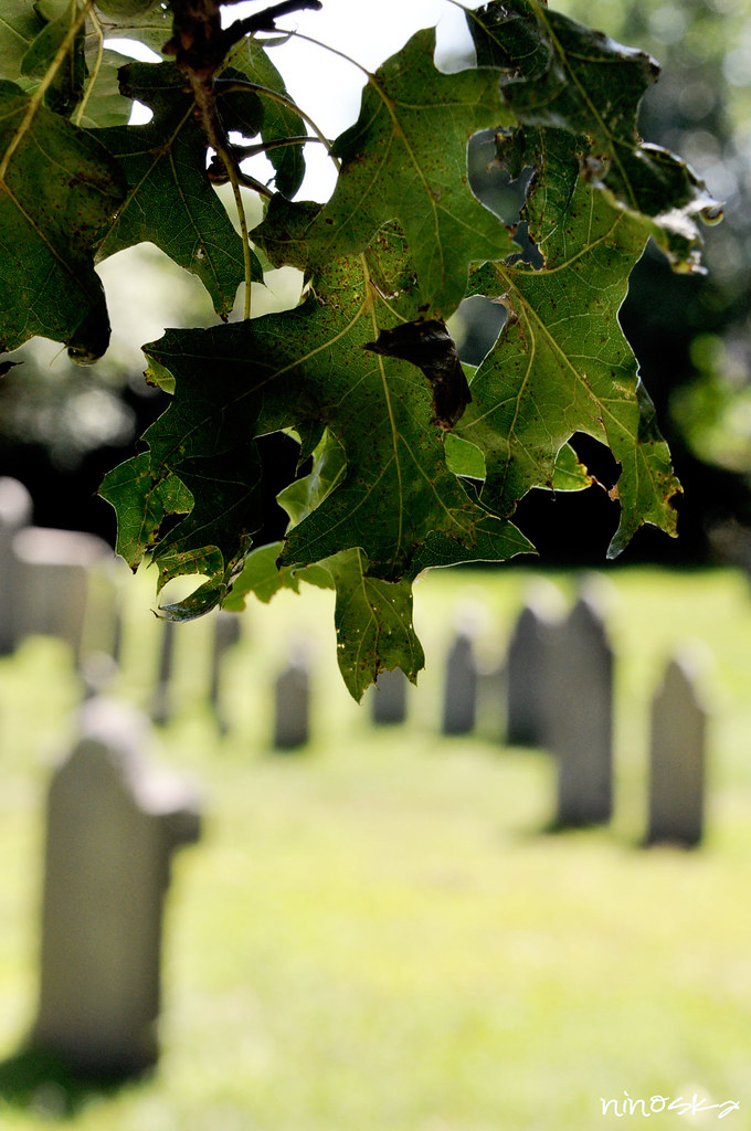 hojas cimentière á Salem été 2011