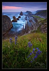 Vigas del mar (efferra) Tags: paisajes flores primavera vertical landscapes spain elmar playas rocas cantabria hierba amaneceresyatardeceres lliencres